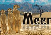 Traffic Exchange (TE-29) -  Meerkat Traffic